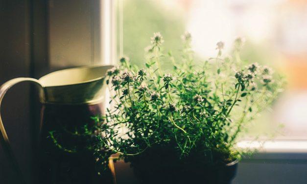 Will a Dehumidifier Kill My Plants