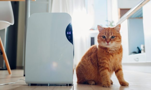 How Do I Know if My Dehumidifier Is Working